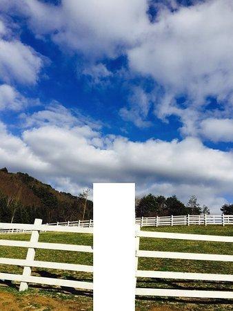 Pyeongchang-gun, Sydkorea: 평창 하늘목장