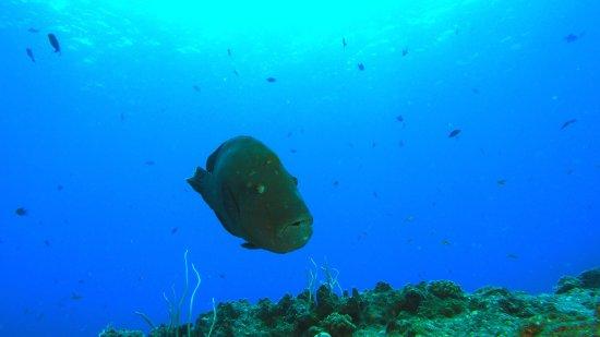 Oasis Palau: photo9.jpg
