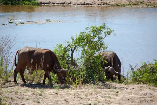 Marloth Park, South Africa: The river close to the lodge