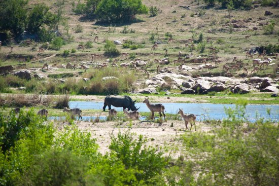 Marloth Park, South Africa: Wildlife by the river