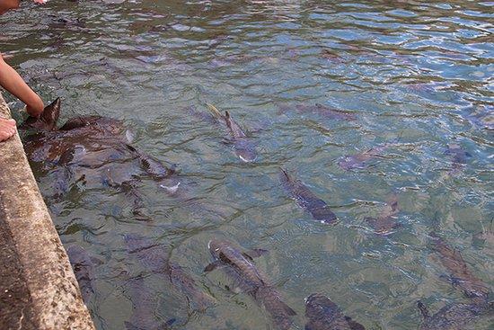 Aquascene: poissons