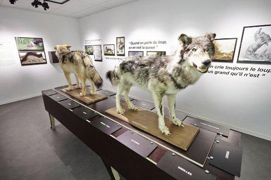 Le Musée du Loup