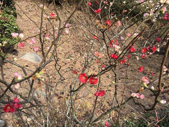 Atami Plum Garden: かわいい梅
