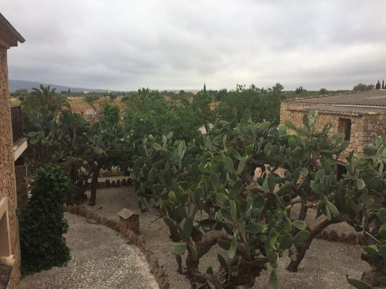 Binissalem, Spain: Het uitzicht vanaf onze kamer. De 'hoteltuin'