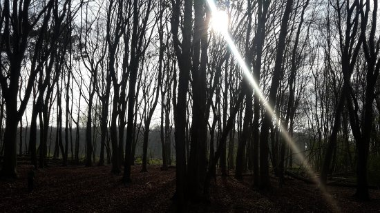 East Harling, UK: Forest Walks