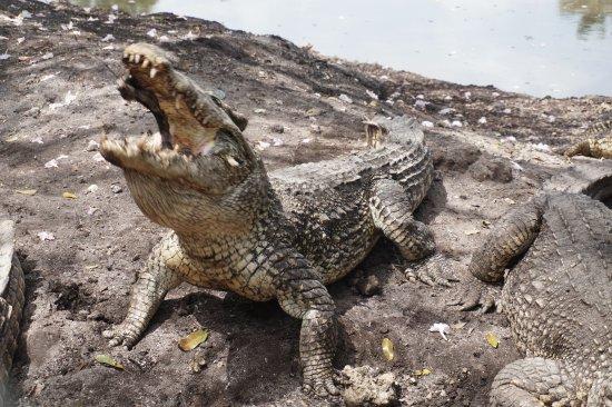Península de Zapata National Park Photo
