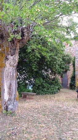 Bilde fra Trequanda