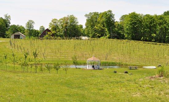Petoskey, MI: Nice outdoor view
