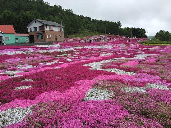 Kutchan-cho, Japón: photo2.jpg