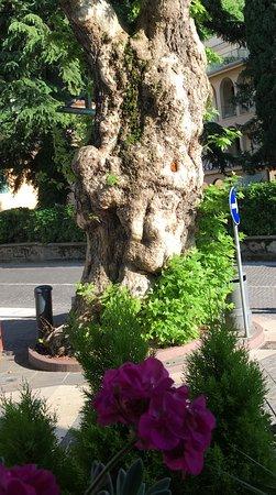 Hotel San Marco : Il platano secolare