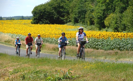 Parcay-les-Pins, France: Clients cycling through suflower fields in the Loire Valley