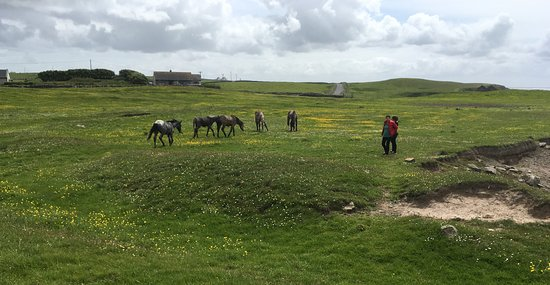 Miltown Malbay, Irlanda: Horses nearby the White Strand Beach