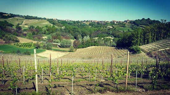 Monta, Włochy: Panoramica Vigna