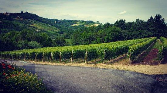 Monta, Włochy: Dalla nostra terrazza