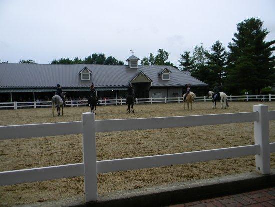 Kentucky Horse Park: The Breeds show
