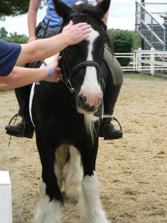 Kentucky Horse Park: Petting the horses