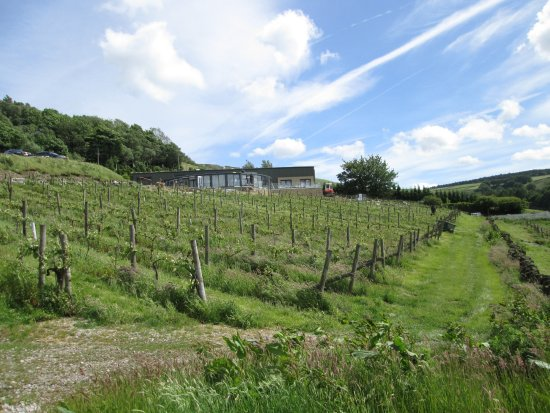 Holmfirth Vineyard: Vineyard with the Resturant in the Distance
