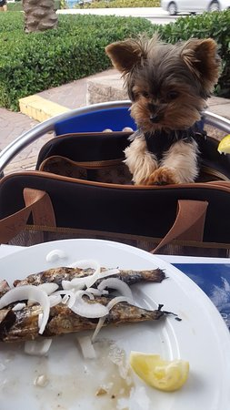 Sunny Isles Beach, FL: Zeus eyeing sardines nearly as large as him