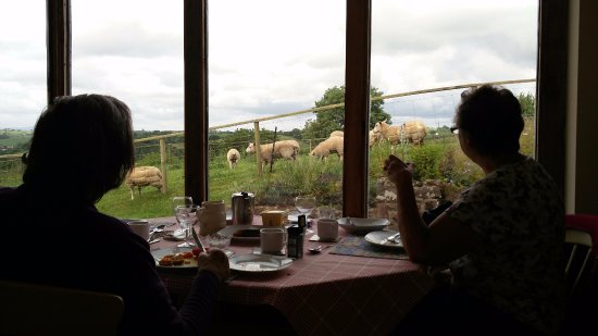 Sandford, UK: Watching the farm animals during breakfast