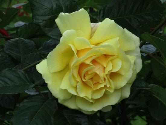 Clevedon, UK: Alexandra Gardens