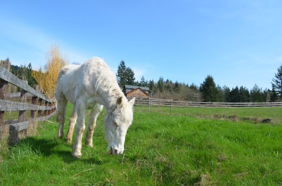 Landscape - Picture of Once In A Blue Moon Farm, Orcas Island - Tripadvisor