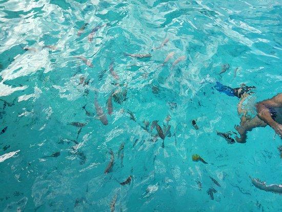 Conrad Bora Bora Nui: muchos peces