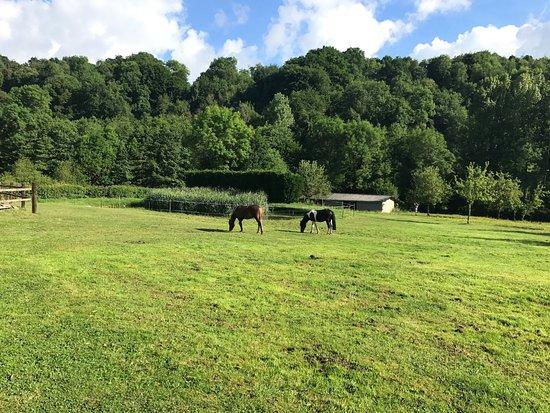 Le Grand Clos de Saint Martin : Le parc et ses chevaux