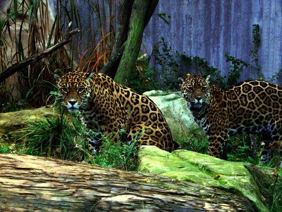 Zoo Halle (Mountain Zoo)