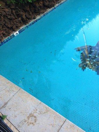 Kihei Kai Oceanfront Condos: Pool never cleaned