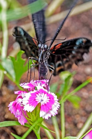 Deer Lake, Kanada: Butterflies come from Costa Rica and the Philipines