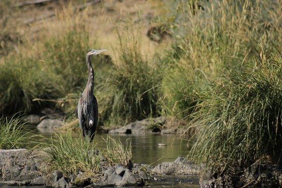 Merlin, OR: We love seeing all the wildlife as we float!