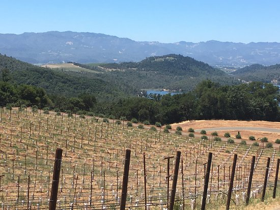 Chappellet: View from the vineyard.