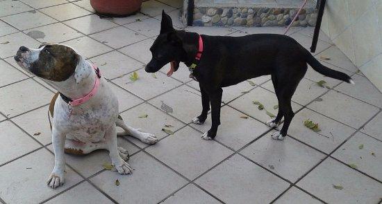 Casa Anita y Corona del Mar: the two very cute resident dogs !