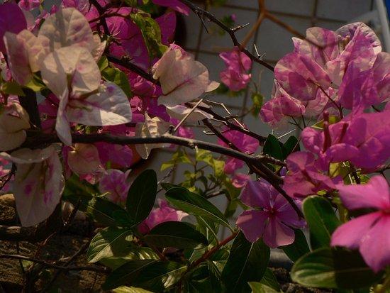 Casa Anita y Corona del Mar: lovely flowers near my balcony