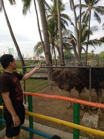 Kawit, Filipiny: FB_IMG_1496293991564_large.jpg
