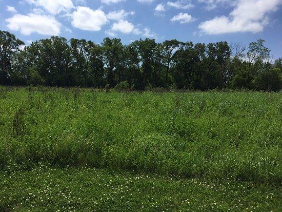 Stateline Restoration Prairie
