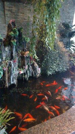 Burlington, WA: Koi pond inside