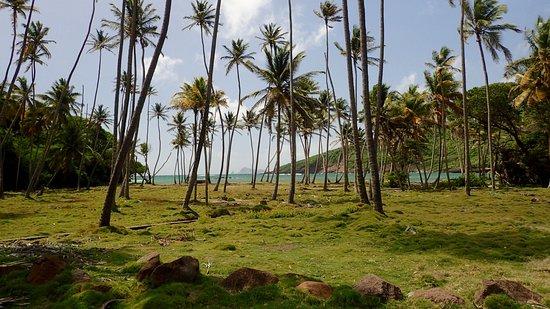 Spring Bay صورة فوتوغرافية