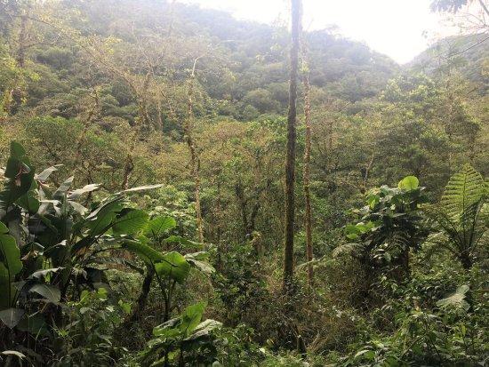 Bajos del Toro, كوستاريكا: Waterfall hike