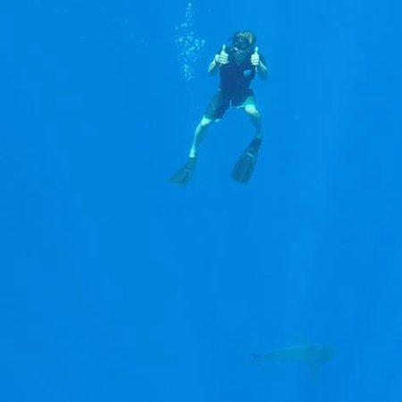 Attraction Slideshow Scuba Diving Snorkeling In Honolulu