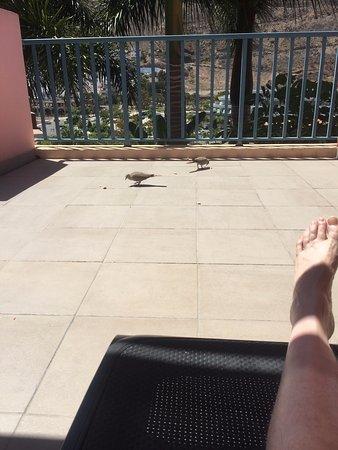 Cordial Mogan Valle: Balcony birds