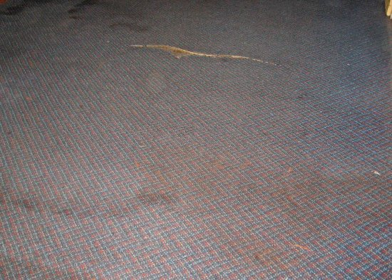 Econo Lodge: Torn, stained carpet