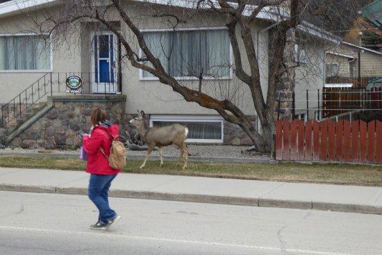 Mount Robson Inn: locals