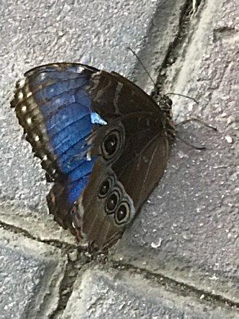 Butterfly House: photo5.jpg