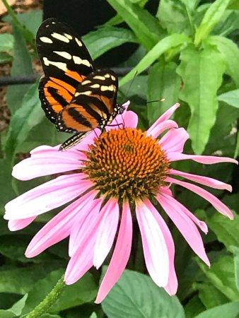 Butterfly House: photo6.jpg