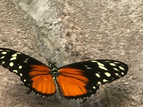 Butterfly House: photo8.jpg