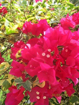 Duqm, Oman: Blumen im Hotelgarten
