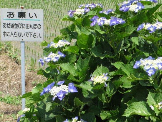 Kaisei-machi Foto