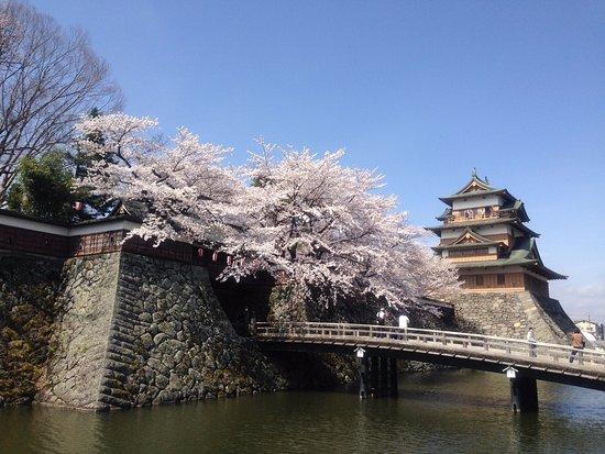 Takashima Castle: 昼間も美しい