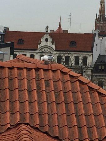 Neiburgs Hotel 사진